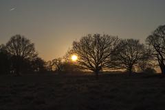 Richmond Park, London (Tiphaine Rolland) Tags: richmond richmondpark london londres parc park nikond3000 d3000 nikon winter hiver sunset coucherdesoleil arbres trees soleil sun