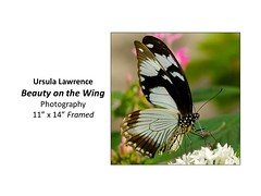 """Beauty on the Wing • <a style=""""font-size:0.8em;"""" href=""""https://www.flickr.com/photos/124378531@N04/32485427905/"""" target=""""_blank"""">View on Flickr</a>"""