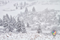 Monte Zoncolan (Pachibro Portfolio) Tags: canon eos 7d canoneos7d pasqualinobrodella pachibroportfolio pachibro scattifotografici friuliveneziagiulia udine tarvisio monti montagna montagne mountian mount natura nature paesaggio paesaggi campagna country countryside campaign alpi alpigiulie neve snow zoncolan ravascletto