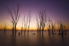 Dead trees (karinavera) Tags: travel sonya7r2 trees epecuen argentina longexposure buenosaires landscape sunset