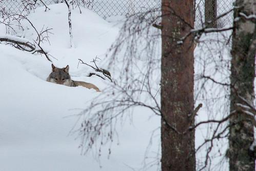 2015_02_Lapland_315