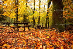 Autumn landscape with beautiful colored trees and benches (Jéssica Rios 17) Tags: abstract autumn autumnal background beautiful beauty branch bright color colored colorful fall flora foliage forest green landscape leaf leafs national natural nature november october orange outdoor park pattern saturated scene season seasonal texture tree vibrant woodland yellow benches