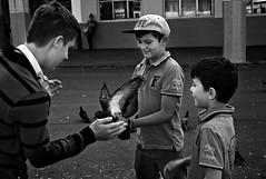26/08/2015 (andreianisimov) Tags: street bw kids pigeon