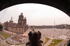 16.08.15: Good bye Mexico (Wang Wang 22) Tags: dog cute nikon pug plush hund nici mops d90 wangwang wangwang22