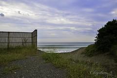 D800 with TAMRON SP 15-30mm F/2.8 Di VC USD (higehiro) Tags: morning beach japan wave   shonan   chigasaki