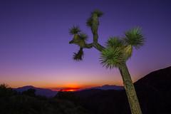 Joshua Tree Sunset (supra455) Tags: california ca sunset red orange nationalpark purple unitedstates desert flash joshuatree strobe greengel