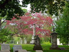 Bellefountaine Cemetery Pink (Wits End Photography) Tags: road street wood pink autumn red plant tree green fall nature colors cemetery grave graveyard grass leaves stone rural season landscape outside drive woods midwest exterior view natural outdoor pavement headstone country tomb lawn stlouis scenic route american missouri gravestone burial marble saintlouis picturesque grounds turf sod roadway bellefountainecemetery