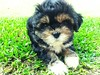 (Gislaine M) Tags: brazil dog pet baby cão dogs beautiful puppy sweet adorable photodog