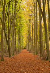 The Way (Rich Lukey) Tags: autumn trees england orange brown tree green fall yellow forest woodland way landscape 50mm woods nikon path corridor surrey wildwood passage beech clandon