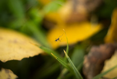 A Bug's Life (Ludvius) Tags: autumn green fall norway bug spider small gras homborsund grimstad ludovicophotography wwwludovicophotocom