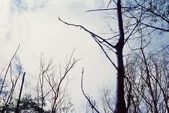 season (chattotomato) Tags: film 35mm minolta kodak rangefinder ishootfilm himatic7s filmisnotdead