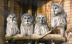 Wildpark Poing, Bayern (Janos Kertesz) Tags: