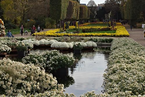 Fleurs au Jardin des Plantes de Rouen