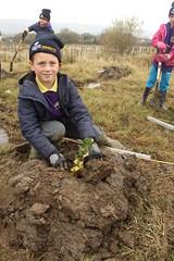 Creating Coed Ffos Las / Creu Coed Ffos Las (Rory Francis) Tags: plant tree coed firstworldwar planting woodlandtrust rhyfelbydcyntaf carwe carway plannu coedcadw gwendraethvalley cwmgwendraeth centenarywoods ysgoltrimsaran coedffoslas