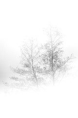 (f_foschi.) Tags: monocromo nikon nuvole natura lucca toscana nebbia albero montagna atmosfera biancoenero pianta albereta nikon50mm d7100 pratofiorito