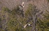 7K8A8983 (rpealit) Tags: scenery wildlife nature new york state bald eagles bird