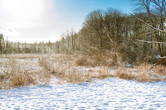 2017 (Chancy Rendezvous) Tags: happynewyear new year 2017 holiday snow landscape massachusetts newengland winter nikon nikkor chancyrendezvous davelawler blurgasm lawler