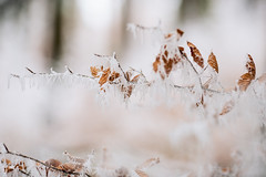 wintery moments (desomnis) Tags: bokeh frost frosty cold winter frostyrime hoarfrost whitefrost autumnfoliage dof desomnis canon6d canon135mmf20 canon135mm white autumnmeetswinter winterly merrychristmas christmas