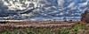 IMG_2809-13Ptzl1scTBbLGEM2 (ultravivid imaging) Tags: ultravividimaging ultra vivid imaging ultravivid colorful canon canon5dmk2 clouds fields farm rural scenic vista autumn autumncolors stormclouds