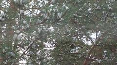 Tree (hugovk) Tags: hvk cameraphone uploaded:by=email tree uusimaa helsinki finland geo:region=uusimaa geo:locality=helsinki geo:country=finland geo:county=helsingin helsingin exif:flash=offdidnotfire exif:aperture=24 exif:exposure=150 camera:model=808pureview exif:isospeed=80 meta:exif=1483765348 camera:make=nokia exif:orientation=horizontalnormal exif:exposurebias=0 exif:focallength=80mm nokia 808 pureview carlzeiss nokia808pureview hugovk autumn november 2016 syksy