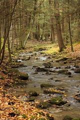 fall creek (Salamanderdance) Tags: creek forest fall atumn stream autumn naure nature crick