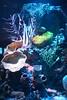 Acuario (Juan_Chanclas) Tags: acuario inbursa medusas mar peces