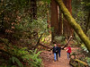 Forest stroll (Nailand) Tags: ancientforest stroll nature usa california trees