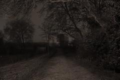 Aranzadi (Esther Goroskieta) Tags: pamplona navarra paisaje árboles niebla noche camino naturaleza serenidad nature landscape tree night path serenity bucolic
