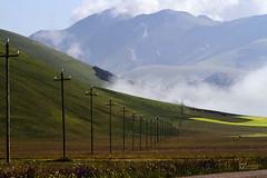 _UM22304R (Foto Massimo Lazzari) Tags: fioritura lenticchie papaveri fiordaliso fiori