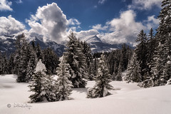 Neuschnee / Fresh snow (Claudia Bacher Photography) Tags: neuschnee fresh snow schnee winter himmel heaven landschaft landscape wolken clouds schweiz switzerland suisse schanfigg fatschél sonya7r tannen hochwang mountain berge graubünden natur nature outdoor tree