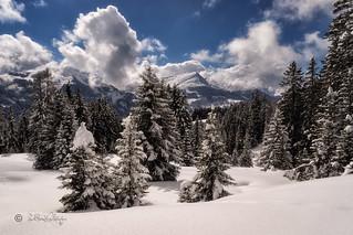 Neuschnee / Fresh snow