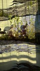 WP_20161228_12_47_35_Pro (reijolehmus) Tags: verho koti curtain home colors värit elf tonttu