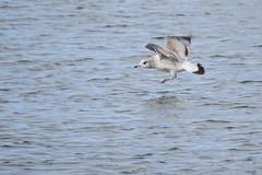 2017 02 18 Tralee Wetlands (2)