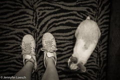 (loesch.) Tags: pet rabbit bunny cutie cute coelho fofo adidas superstar blackandwhite pb night inside particular cotidiano