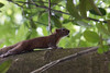 Hey Folks (Travelling Rats) Tags: bangladesh srimongal