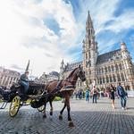 Bruxelles - Grand-Place - Flowertime thumbnail