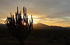 ... (alicia alondra) Tags: chile sunset cactus sky silhouette clouds atardecer nikon desert cielo atacama silueta 2015 d3200
