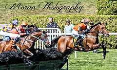 The Lonesome Glory Handicap (EASY GOER) Tags: horses horse ny newyork sports race canon jump jumping track running racing 5d athletes races hurdles 56 thoroughbred equine steeplechase belmontpark 400mm markiii
