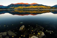 First Light At MT Elbert (Robin-Wilson-Off) Tags: autumn reflection fall colors leaves sunrise bravo colorado rocks shoreline floating changing alpenglow aspentrees mtelbert nikond800 nikon1635mmf4 gitzogh3750qr forebayreservoir 14440feet4401m gitzogt354il