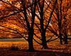 Fall Foliage (Dalliance with Light (Andy Farmer)) Tags: autumn trees orange black fall leaves gardens landscape us newjersey unitedstates nj foliage rutgers orangeandblack eastbrunswick rutgersgardens