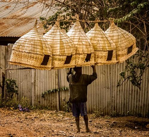 Chicken Coups, Ethiopia