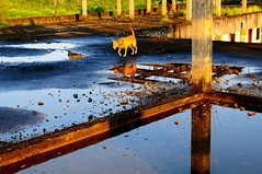 ,, Early Morning Sun ,, (Jon in Thailand) Tags: roof dog sun reflection wet nikon mama jungle nikkor tropics k9 morningsun d300 earlymorningsun 175528 abandonedabusedstreetdogs littledoglaughedstories thedogpalace