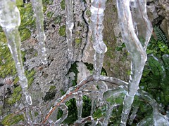 Dedicated To Car Mrazomor (explore October 18th, 2015) (Master Of Pixels :o)) Tags: winter plant ice gelo croatia led explore invierno eis zadar inverno zima icicles hielo glace hrvatska ghiaccio ld jg j sige  buz    ghiaccioli   biljka bng   carmbanos    diklo   canonpowershotsx100is ad     ghea     yashajakovsky