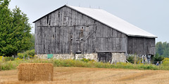 Yesterday's barn, this year's hay bale - Caledon, Ontario (edk7) Tags: ontario canada man building male field architecture barn rural fence landscape person countryside bush gate farm country crop vista agriculture shrub weatheredwood haybale agricultural patchedup concreteblock metalroof caledon oldstructure fieldstone barnboard peelregion sigma150mm128apomacrodghsm nikond610