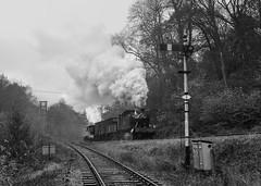 Autumn Gloom (Articdriver) Tags: heritage rain woodland track railway trains steam signals locomotive forestofdean gwr 5541 deanforestrailway norchard