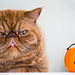 my little Halloween..