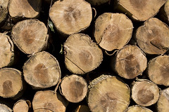 Wood Pile (Mather93) Tags: wood texture woods cornwall pattern logs pile truro idless