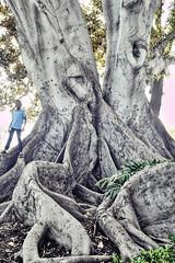 (todd-) Tags: 28mm toyo moretonbayfig orangecalifornia toufivestar planted1875