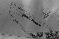 Nino Rocha Fotografia (nino rocha fotografia) Tags: circo osasco cu vista movimento espetculo trapzio trapezista ninorochafotografia
