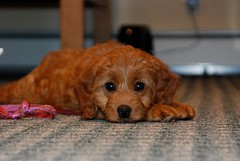 oh-what-an-adorable-little-girl--shes-one-of-ava-and-chewys-girls-_4223650981_o